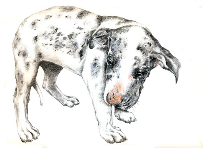 doggenwelpe300